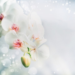 Close up of Beautiful white orchid flowers at blue background with bokeh. Nature , spa or wellness concept, floral border