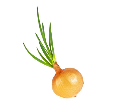 Yellow onion with green sprouts on a white background