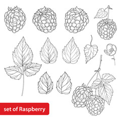 Vector set with outline Raspberry, bunch, berry, flower and leaves in black isolated on white background. Fruit elements with raspberry in contour style for summer design and coloring book.