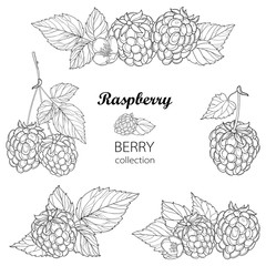 Vector set with outline Raspberry bunch, berry, flower and leaves in black isolated on white background. Composition with raspberry fruits in contour style for summer design and coloring book.