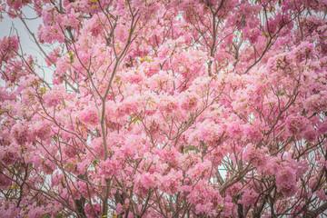 Sweet pink flower blossom in spring season