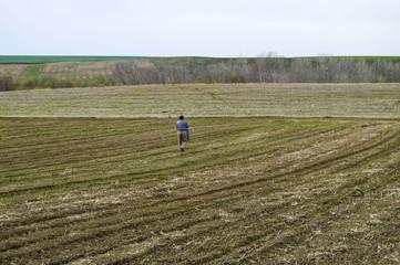 Fertilized cultivated field, fertilized green lentil field, fertilizer and agriculture