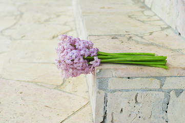 Bouquet of hyacinths on a concrete background