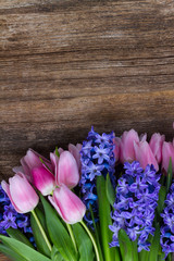 Pink tulips and blue hyacinths flowers on dark aged wooden background with copy space