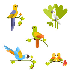 Set of beautiful colorful parrots. Vector flat illustration