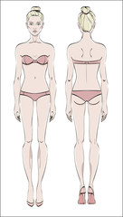Female figure: front and back. Vector. Human body in linear style.