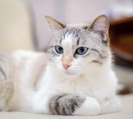White cat lying on the sofa