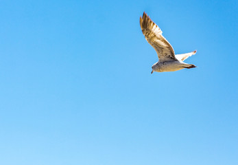 Seagull Flies Over The Beach