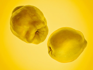 Two quinces on yellow background. Art food concept