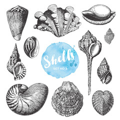 summer, beach and ocean vector design elements: collection of hand drawn sea shells - set 3