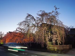 夜桜 ライトアップ 角館 武家屋敷