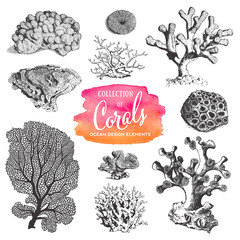 summer, beach and ocean vector design elements: collection of sea coral drawings