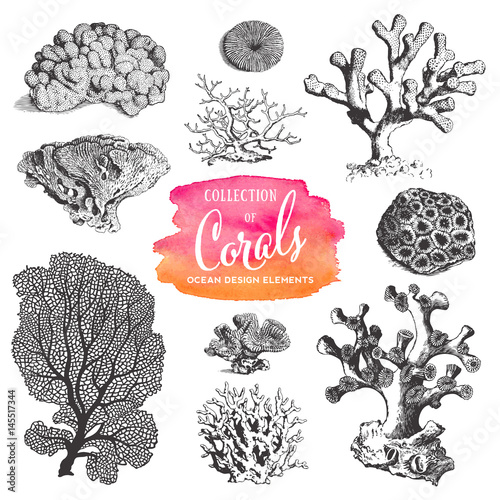 Superb Summer, Beach And Ocean Vector Design Elements: Collection Of Sea Coral  Drawings