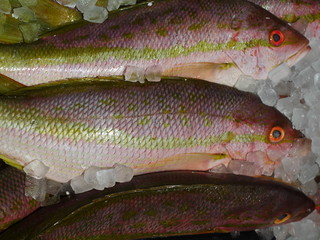 Raw Yellow Tail Snapper Fish