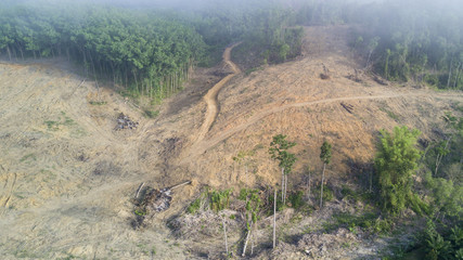 Deforestation. Logging. Rainforest destroyed for oil palm industry
