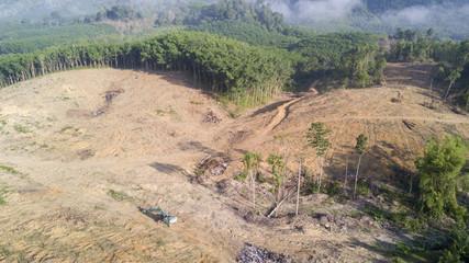 Deforestation. Logging. Rainforest destroyed for oil palm industry