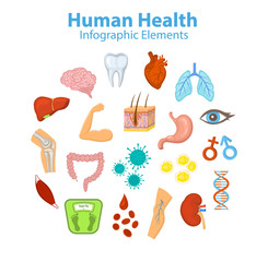 Human Health Infographic Elements Objects. Heart, brain, liver, lungs, stomach, intestine, skin hair structure, red blood cells, fat and immune cells, body parts, bones, joints, muscle etc