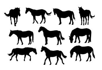 Different horses silhouette set.