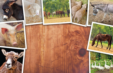 Agriculture and livestock collage, photos with various animals