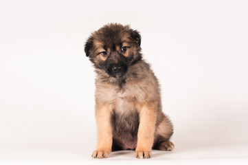 Cute little puppy portrait