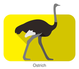 Ostrich walking, animal body series, vector
