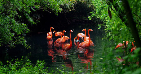 Foto auf Leinwand Flamingo A group of pink flamingos play in the water and are in a fantastic location