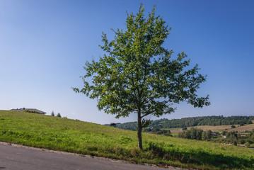 Rural landscape in Cassubia region of Poland