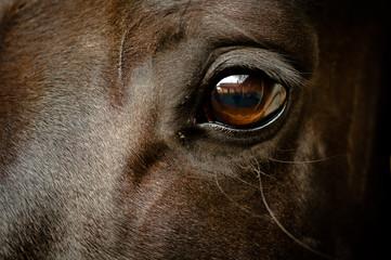 Türaufkleber Pferde Auge eines schwarzen Pferdes Nahaufnahme