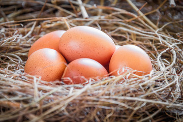 Eggs in straw / Fresh farmer's eggs.