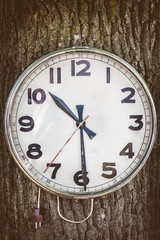 Vintage electric clock hanging on a tree