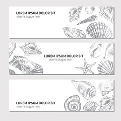 Seashells hand drawn vector graphic etching sketch isolated on white background, decorative banner, underwater artistic marine graphic texture, template label layout design for card, beauty salon, spa