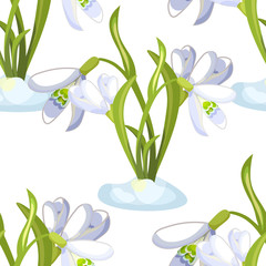Seamless pattern snowdrop flower blossomed with leaves. illustration