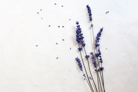 lavender herb white