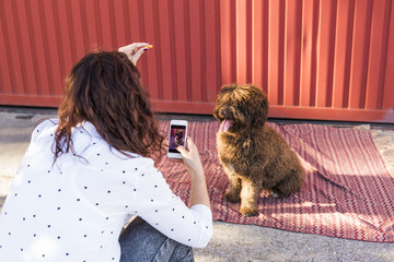 Woman with mobile smart phone taking a photo of Spanish water dog over red background. Happy dog with tongue out.  portrait Outdoors