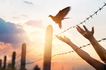 Fototapete - Woman hands frees the bird above a wire fence barbed