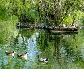 oasi del laghetto