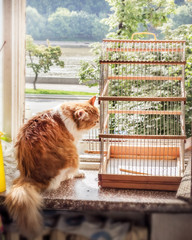 Cat with bird cage