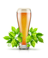 Glass of light lager Beer with white foam and hop plants buds.