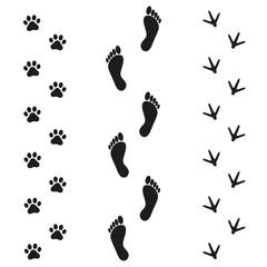 Human dog and bird tracks on white background