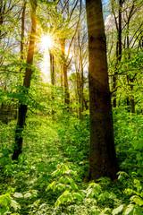 Wald im Frühling mit durch die Bäume scheinender Sonne