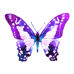 violet butterfly,watercolor,isolated on a white