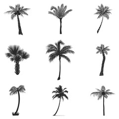 Vector set of silhouettes of palm trees, isolated on white background.