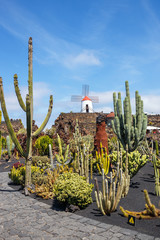 Photo sur Aluminium Cactus View of cactus garden, jardin de cactus in Guatiza, popular attraction in Lanzarote, Canary islands