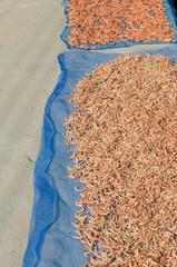 Dried shrimp, fisherman dry small shrimp for sell at fresh market.