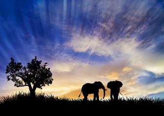 elefantes bajo el cielo azul