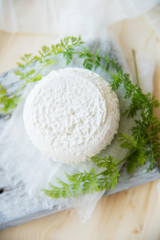 Set of cheese on wooden background