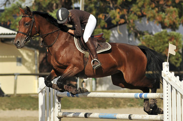équitation, épreuve de saut