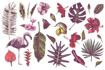 Hand drawn tropical leaves, flowers and flamingo