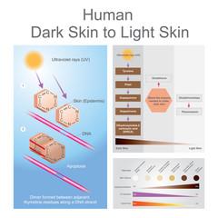 Human dark skin to light skin process