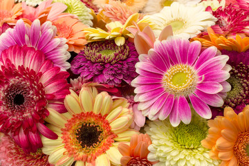 Background of multicolored bright gerberas, horizontal